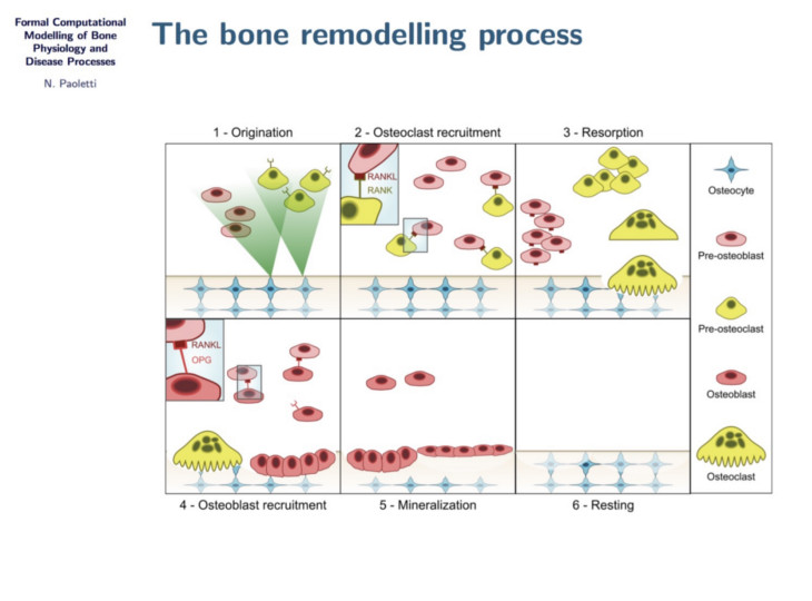 Formal Computational Modelling of Bone Physiology and Disease Processes